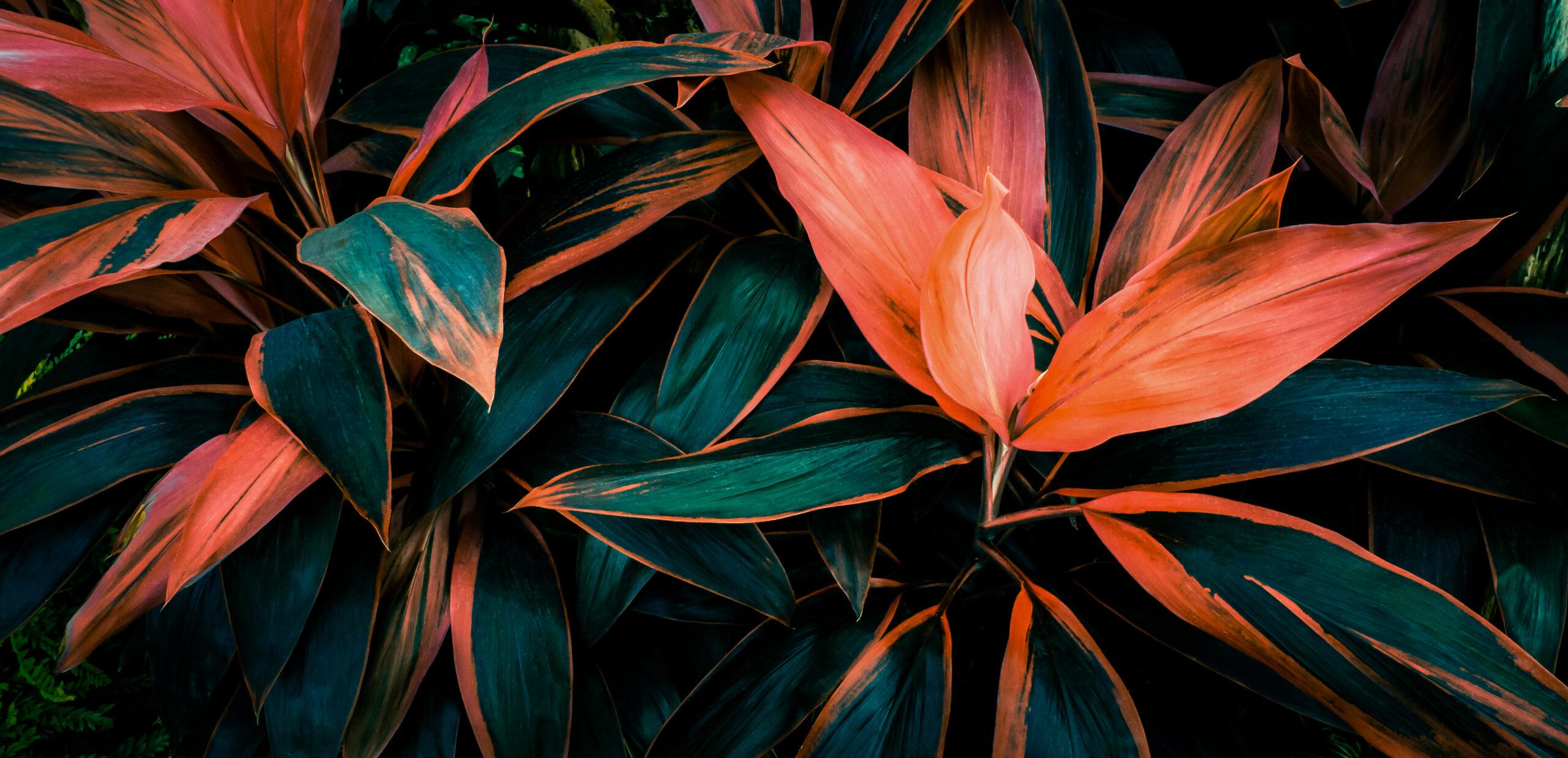 lehtdekoratiivne-taim